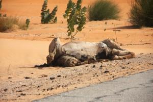 Eines der vielen toten Tiere am Straßenrand